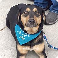 Adopt A Pet :: Luna - Homewood, AL