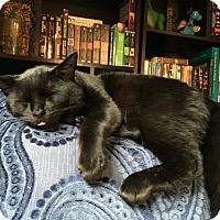 Adopt A Pet :: Toothless - San Jose, CA