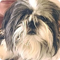 Adopt A Pet :: Lola - Homestead, FL