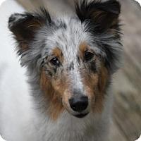 Adopt A Pet :: Savanna - Chesapeake, VA