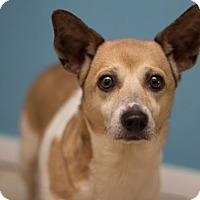 Adopt A Pet :: Mama - Millersville, MD
