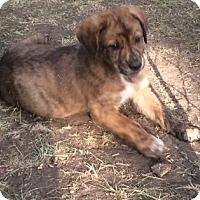 Adopt A Pet :: Dozer - Saskatoon, SK