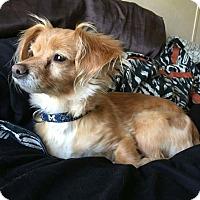 Adopt A Pet :: Little Bit - Grand Rapids, MI