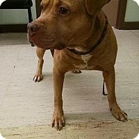 Adopt A Pet :: Nino - Mt. Vernon, IL