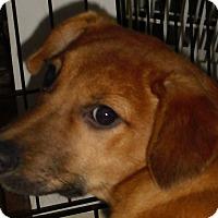 Adopt A Pet :: Alia - Coventry, CT