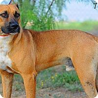 Adopt A Pet :: Trigg HS Orig - Big Spring, TX