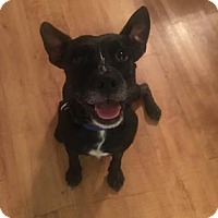 Adopt A Pet :: Odie - Gainesville, FL