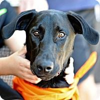 Adopt A Pet :: Duke - Sunnyvale, CA