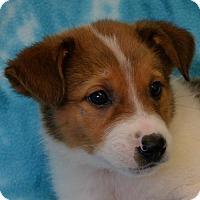 Adopt A Pet :: Sarai - Eureka, CA
