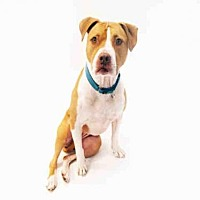 Adopt A Pet :: DIAMOND - Hampton Bays, NY