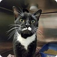 Adopt A Pet :: Groucho - Elyria, OH