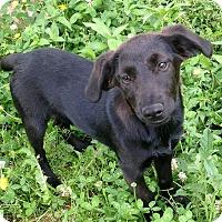 Adopt A Pet :: Anna Banana - E. Greenwhich, RI