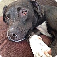 Adopt A Pet :: Jackie (ETAA) - Washington, DC
