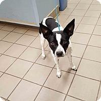 Adopt A Pet :: George Michael - Milwaukee, WI