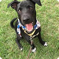 Adopt A Pet :: Oz - Vancouver, BC