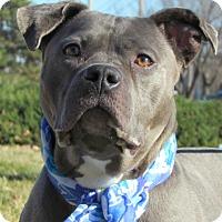 Adopt A Pet :: Neptune - St. Louis, MO