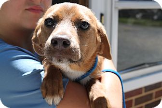 Dachshund Mix Dog for adoption in Waldorf, Maryland - Adrian