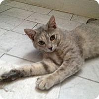 Adopt A Pet :: Maeby - St. Louis, MO
