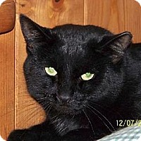 Adopt A Pet :: Stokely - Grantville, PA