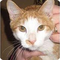 Adopt A Pet :: Creamcycle - Jenkintown, PA