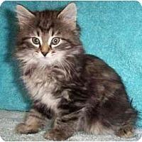 Adopt A Pet :: Tina - Reston, VA