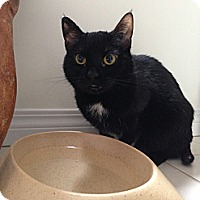 Adopt A Pet :: Charm - Edmonton, AB