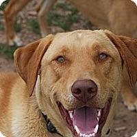 Adopt A Pet :: Tucker - Russellville, KY