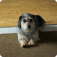 Adopt A Pet :: Rocky - Lorain, OH