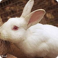 Adopt A Pet :: Casanova - Santa Barbara, CA
