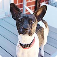 Adopt A Pet :: Chips - Smyrna, GA