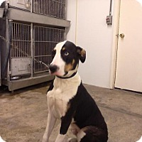 Adopt A Pet :: Frank - Upper Sandusky, OH