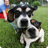 Adopt A Pet :: Gwen and Gavin - Bonded Pair - Sarasota, FL