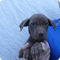 Adopt A Pet :: Corbin - Oviedo, FL