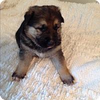 Adopt A Pet :: Noah - Victorville, CA