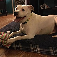 Adopt A Pet :: Marley - New Lisbon, NJ