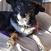 Border Collie Mix Dog for adoption in Maryville, Missouri - Gary