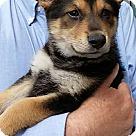 Adopt A Pet :: Trip