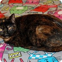 Adopt A Pet :: Sissy - Salem, WV