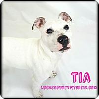 Adopt A Pet :: Tia - Sylvania, OH