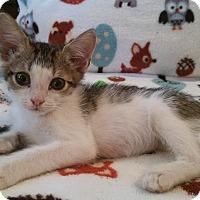 Adopt A Pet :: Owl - Ocala, FL