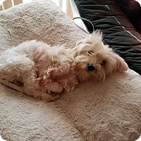 Adopt A Pet :: Carmella - conroe, TX