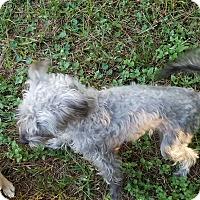 Adopt A Pet :: MYA - Houston, TX