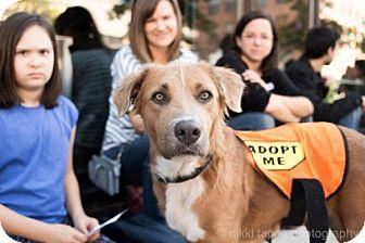 Hound (Unknown Type) Mix Dog for adoption in Brooklyn, New York - Esmerelda Avocet