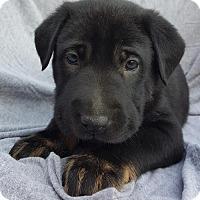 Adopt A Pet :: Stanley - Champaign, IL