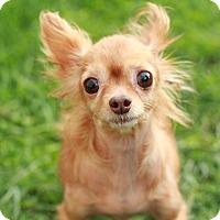 Adopt A Pet :: Sally - Romeoville, IL