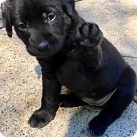 Adopt A Pet :: Macy Mae - Milton, GA