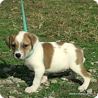 Adopt A Pet :: CLAIRE/ADOPTED - PRINCETON, KY