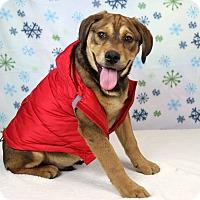 Adopt A Pet :: Carlton - Joliet, IL