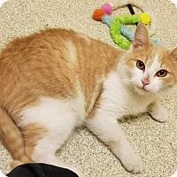 Adopt A Pet :: Tower - Windsor, VA