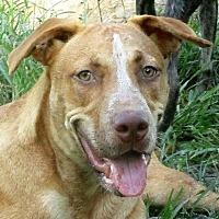 Adopt A Pet :: Denzel - Lake Charles, LA